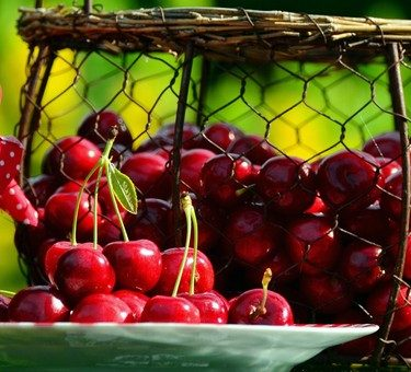 Kent Cherries